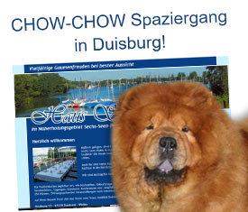 Chow-Chow Spaziergang in Duisburg